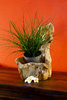 Teak Root Wood Bowl / Planter